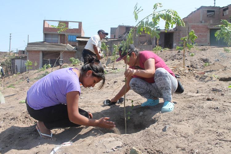 Alrededor de 100 familias del AA.HH. Daniel Alcides Carrión se benefician con arborización