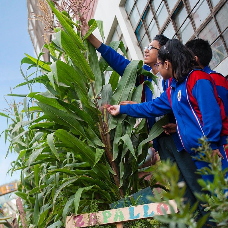 Educación Ambiental - Asociación UNACEM